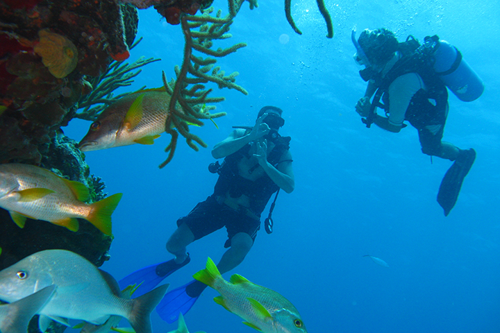 Scuba Diving on Our Honeymoon